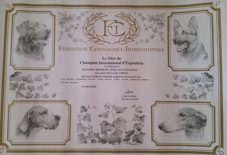 Titulo Internacional